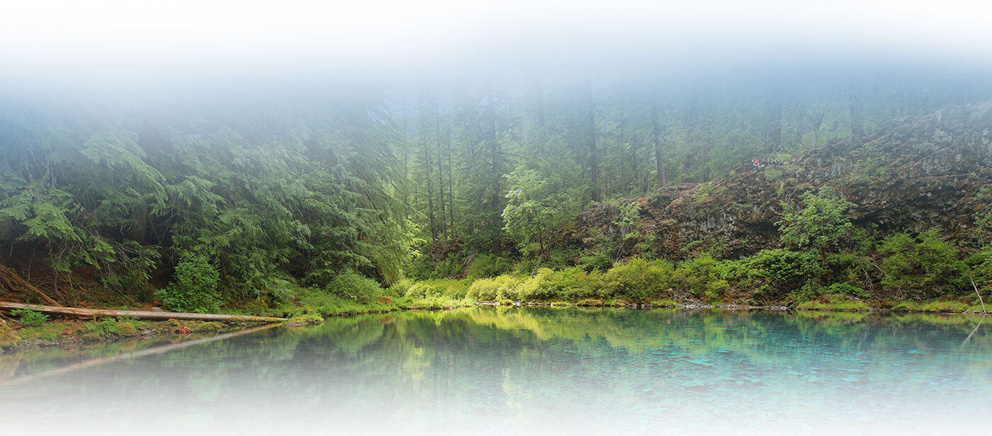 Forest in the Cascade Mountains - Pacific Northwest Acupuncture & Herbal Clinic
